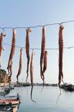 festmåltidbläckfisk Fotografering för Bildbyråer