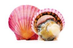 Feston à Shell image libre de droits