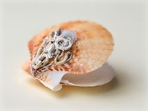 Feston Shell Encrusted With Calcareous Tubes image stock