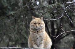 Fet katt Arkivbilder