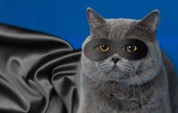 Fet katt i superheromaskering fotografering för bildbyråer