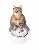 Fet katt på skala Royaltyfri Bild