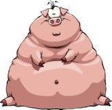 fet pig Fotografering för Bildbyråer