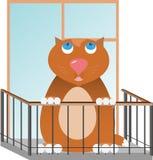 fet red för katt arkivfoto