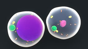 Feta celler eller Adipocytes royaltyfri illustrationer