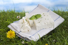 Feta cheese with fresh herbs. Stock Photo
