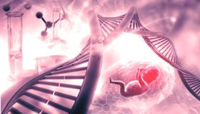 Fetal with DNA. On abstract background. 3d illustration Stock Photography