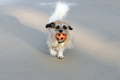 fetch пляжа Стоковые Фото