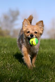 Fetch! Royalty Free Stock Photo