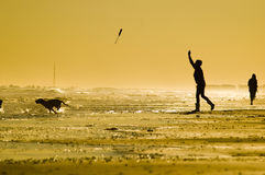 Fetch. Dogs playing fetch at the beach at sunset stock images