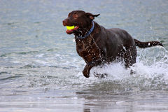 Fetch Stock Photography