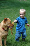 Fetch game. Toddler playing with dog in on grass Royalty Free Stock Photos
