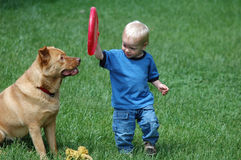 Fetch game. Toddler playing freesbee with dog on the grass Stock Image