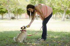 Fetching a ball at a park Stock Photography