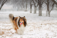 Fetching a ball in winter. Stock Photos