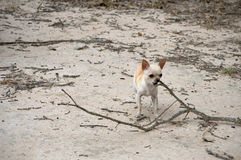 Fetching a Branch Stock Photo