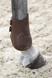 Fetlock protection for horse Stock Photos