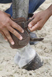 Fetlock protection for horse Stock Images