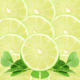 Fetta degli agrumi della calce del limone come fondo Fotografia Stock