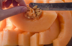 Fetta del melone Fetta della frutta pronta da mangiare fotografia stock libera da diritti