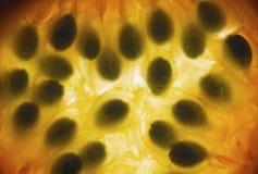 Fetta della passiflora commestibile Fotografia Stock Libera da Diritti