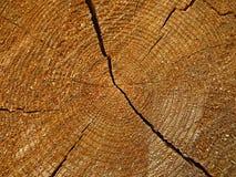 Fetta di legno Immagini Stock Libere da Diritti