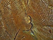 Fetta di legno Fotografie Stock