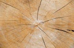 Fetta di sfondo naturale del legname di legno Fotografie Stock Libere da Diritti