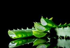 Fetta di verde della pianta dell'aloe con la riflessione isolata sul nero Fotografie Stock