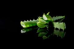 Fetta di verde della pianta dell'aloe con la riflessione isolata sul nero Fotografia Stock Libera da Diritti