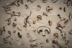 Fette di funghi secchi su carta Immagini Stock Libere da Diritti