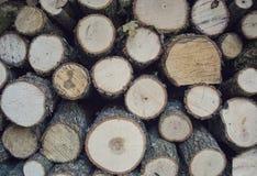 Fette di legno Immagine Stock Libera da Diritti