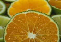 Fette di limetta o di limone Immagini Stock