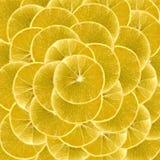 Fette di limone vibrante per gli ambiti di provenienza Immagini Stock
