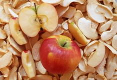 Fette fresche ed asciutte di mele immagine stock