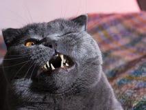 Fette Katze lizenzfreies stockbild
