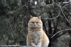 Fette Katze Stockbilder