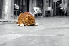 Fette rote Katze - Fette auswendiges Katze Stockfotografie