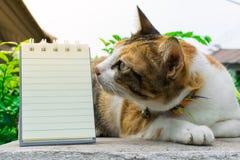 Fette thailändische Katze, die auf einer Wand nahe einem Baum im Haus vor Sonnenuntergang liegt Lizenzfreie Stockfotografie