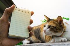 Fette thailändische Katze, die auf einer Wand nahe einem Baum im Haus vor Sonnenuntergang liegt Lizenzfreies Stockbild