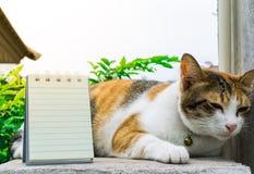 Fette thailändische Katze, die auf einer Wand nahe einem Baum im Haus vor Sonnenuntergang liegt Lizenzfreie Stockbilder