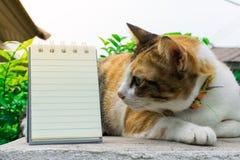 Fette thailändische Katze, die auf einer Wand nahe einem Baum im Haus vor Sonnenuntergang liegt Lizenzfreies Stockfoto