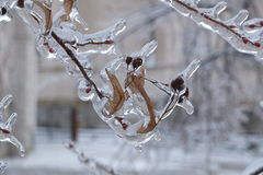 In fetters of ice stock photo