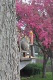 Fettes Eichhörnchen stockfoto