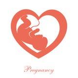 Fetus icon Royalty Free Stock Images