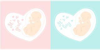 Maternity  illustration. It is a girl. It is a boy. Fetus inside mom`s belly. Pregnancy icon Royalty Free Stock Images