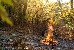 Feu dans la forêt d'automne Photos libres de droits