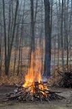 Feu dans les bois Image libre de droits