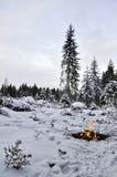 Feu de camp dans la forêt de l'hiver Images stock