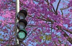 Feu de signalisation vert de connexion devant l'arbre rose fleurissant Photographie stock libre de droits